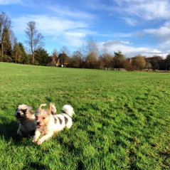 Dog walking Coventry