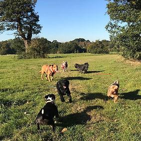 dog walk at Stoneleigh