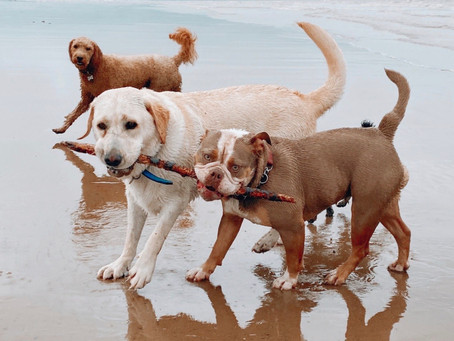 Beach Adventures
