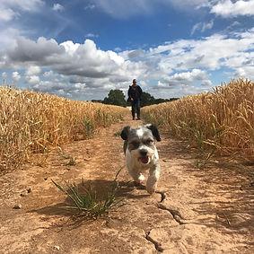 Dog walk at Millisons Wood