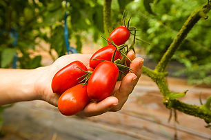 tomates-la-squisita-villeneuve-ascq-rest