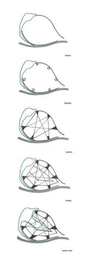Schéma conceptuel
