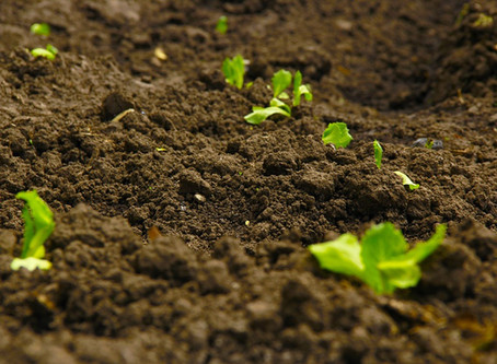 General Mills will implement regenerative agriculture on 1 million acres of land
