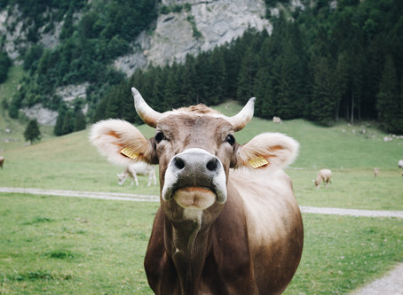 What's the beef? Beef, methane gas, and consumption