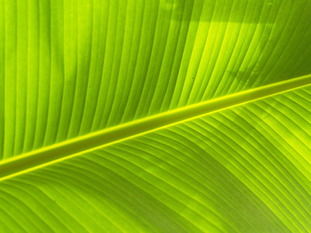 Thailand Supermarket Uses banana leaves instead of plastic packaging