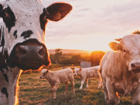 Less meat draws ire from the food industry as scientists push for sustainability