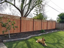 Privacy fence and Sod