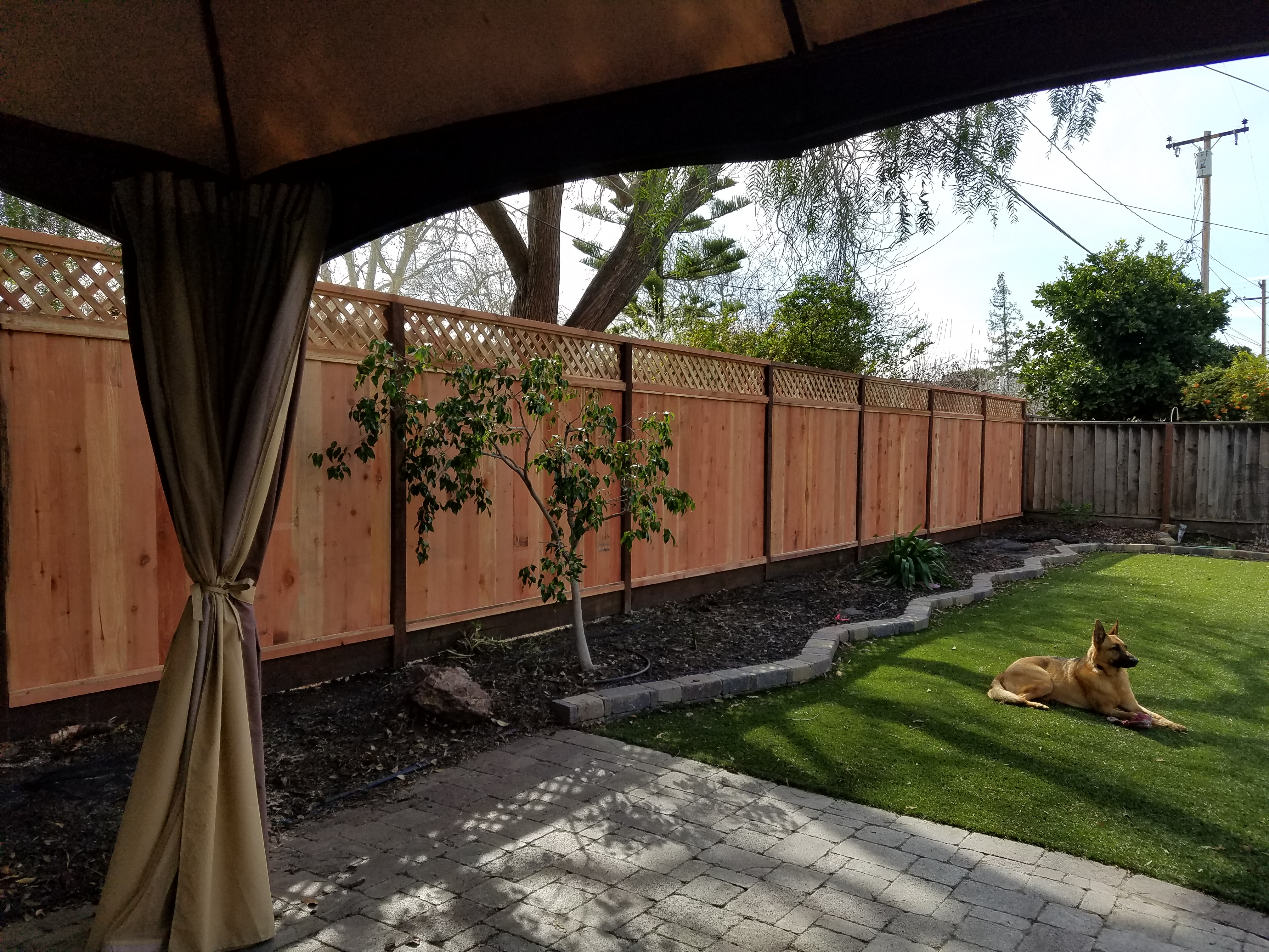 Privacy fence and Synthetic grass