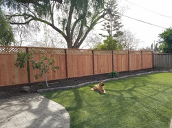 Privacy fence with synthetic grass