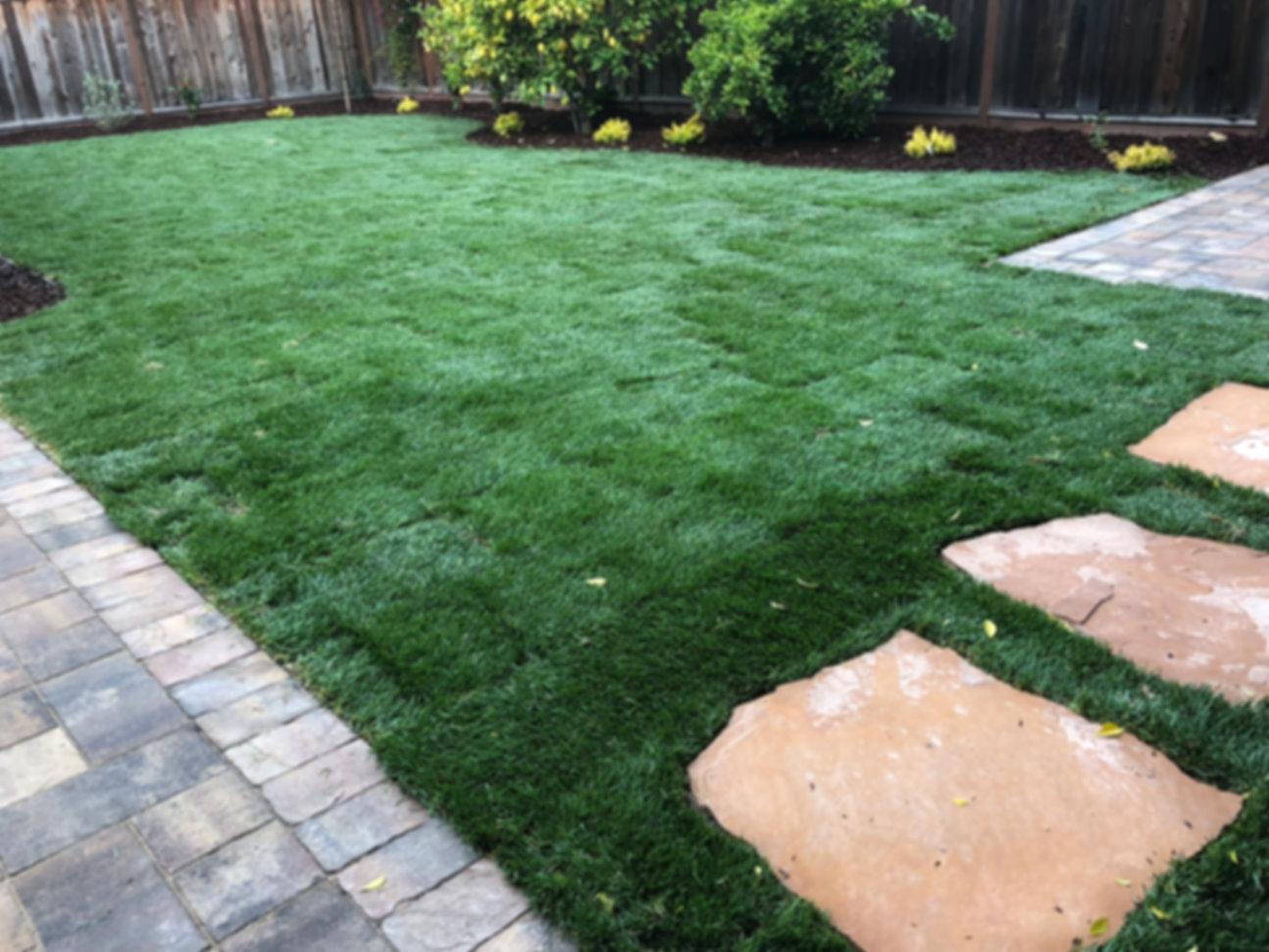Natural Grass Installation