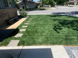 New Modern Lawn with steps