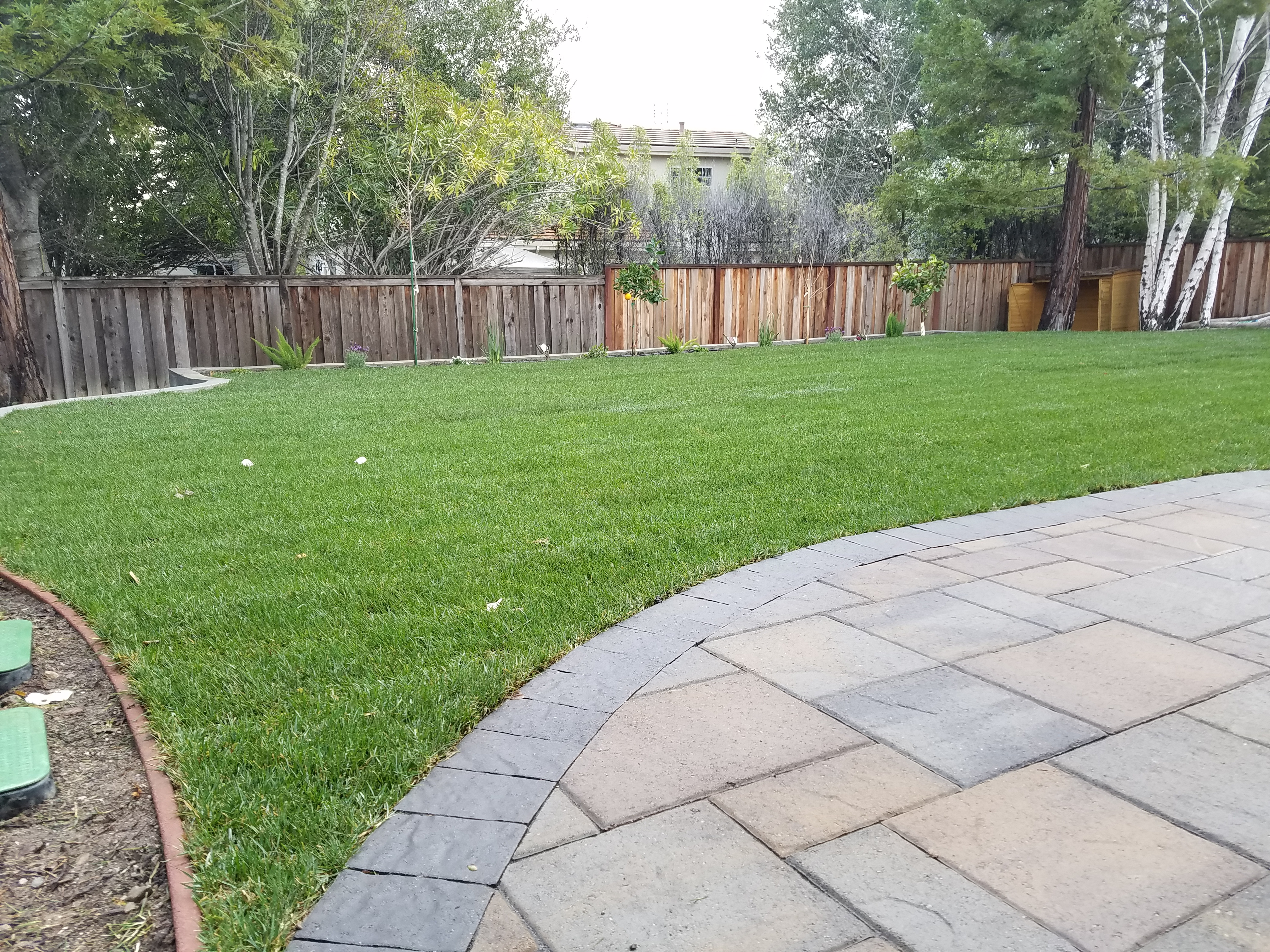 Sod, pavers and fence