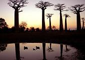 2009 Madagascar