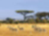 2014-Voyage à la carte-Afrique du Sud