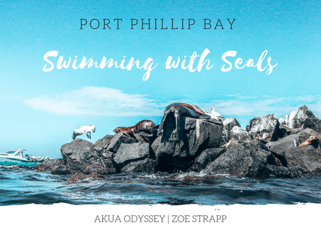 Swimming with the Seal's | Port Phillip Bay 2019
