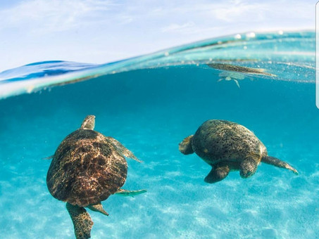How to make a difference this World OceansDay