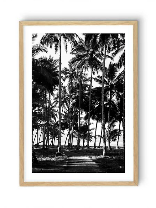 Path beyond the Palms, Print