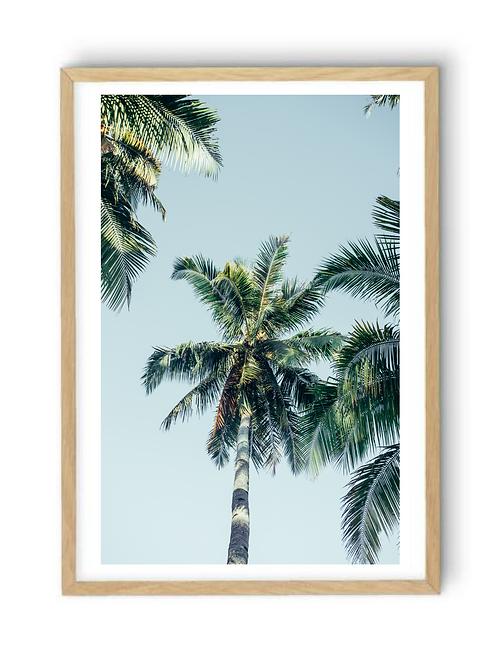 Retro Palms,  Print