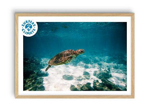 Ningaloo Turtle,  Print