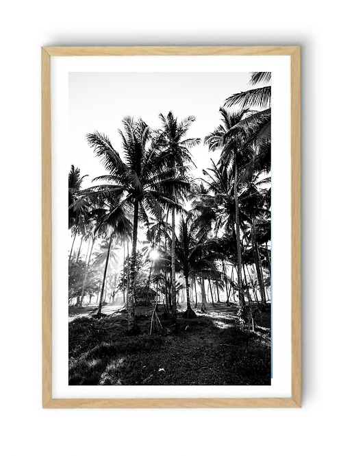Hut among the Palms, B/W Print