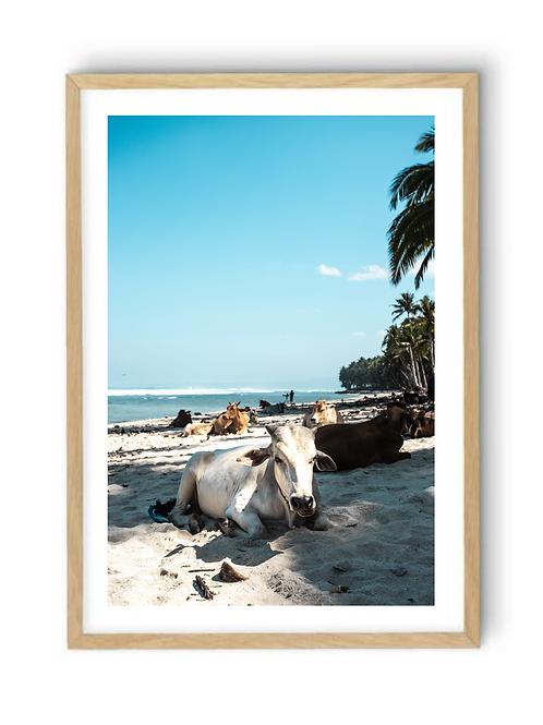 Cows on the Beach, Print