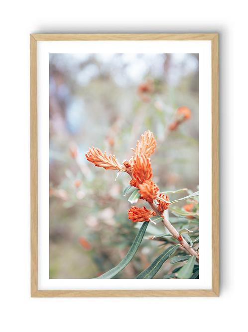 Australian Flora, Print