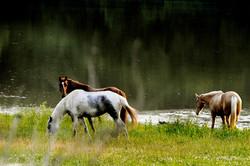 HorsesCartersCreek.jpg
