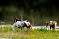 Horses Franklin, TN