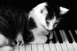 Cat on the Keys