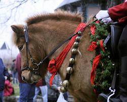 Parade Horse.jpg