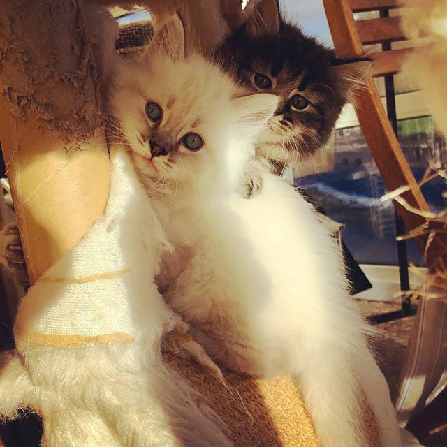 #cats_of_instagram #topcatphoto #catsins