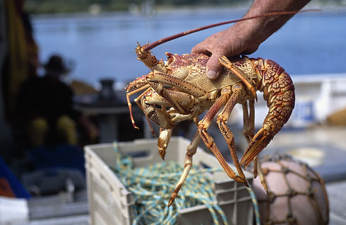 Canva - Fresh Lobster.jpg