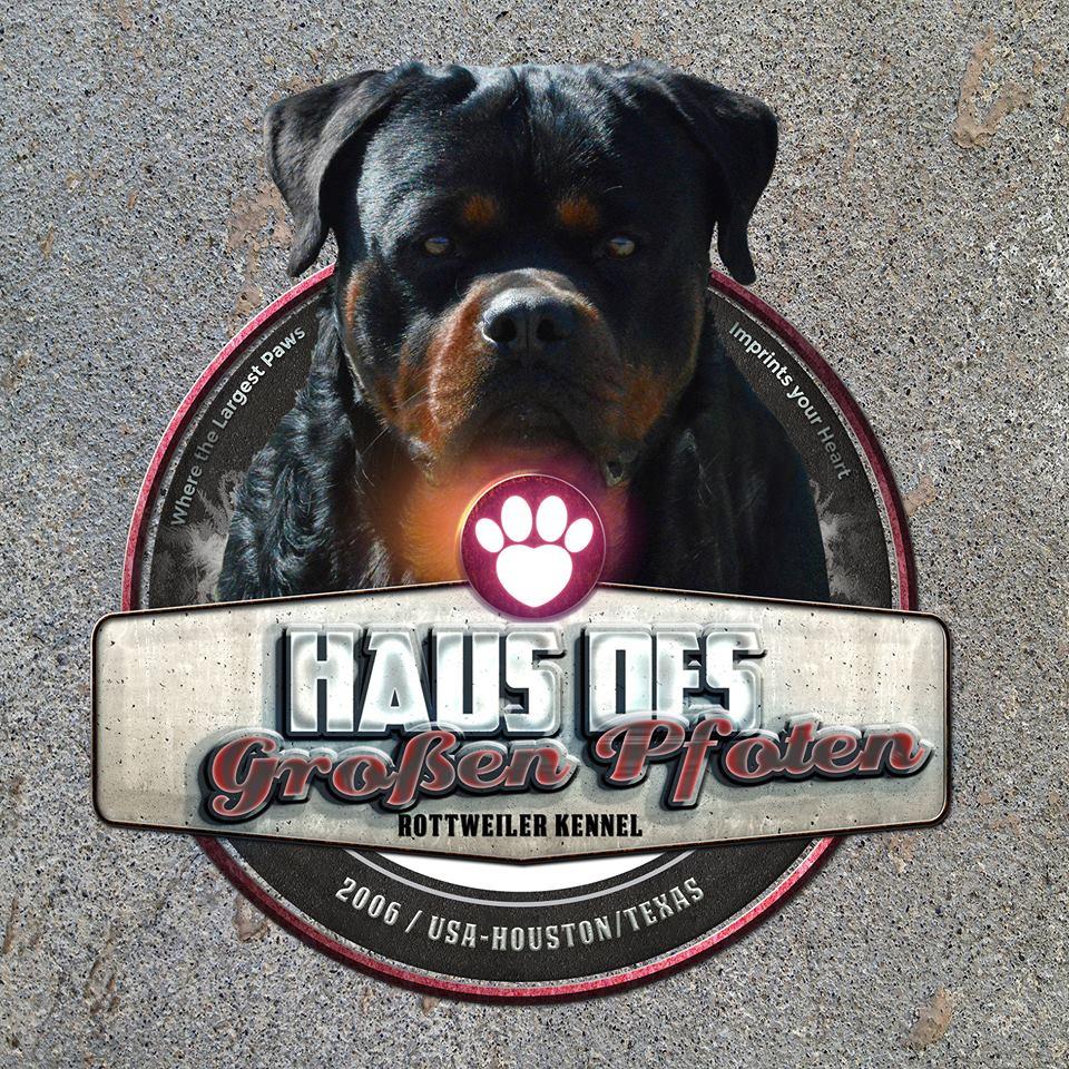 Texas Rottweilers United States Haus Des Großen Pfoten Rottweilers