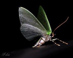 Mariposa verde.jpg