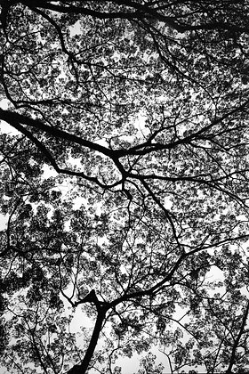 Speckled Canopy by BARY CHA CHA, Art Forum, Art for homes and offices, Singapore photography