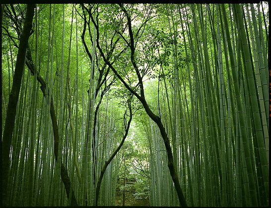 Bamboo Grove, Japan by KHENG LI WEE, Singapore Photography, Art for homes and offices, Art Forum, Southeast Asian art