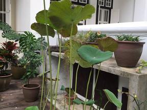 Chua Ek Kay and the Lotus