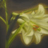 Eric Chan, Lily glow, 2009, oil on canva
