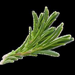 73939-hair-herb-thymes-rosemary-herbs-do