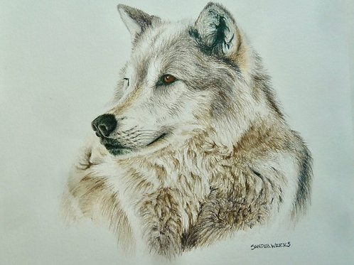 Canadian Wolf, Sandra Weeks, Colored pencil - , 9 x 9