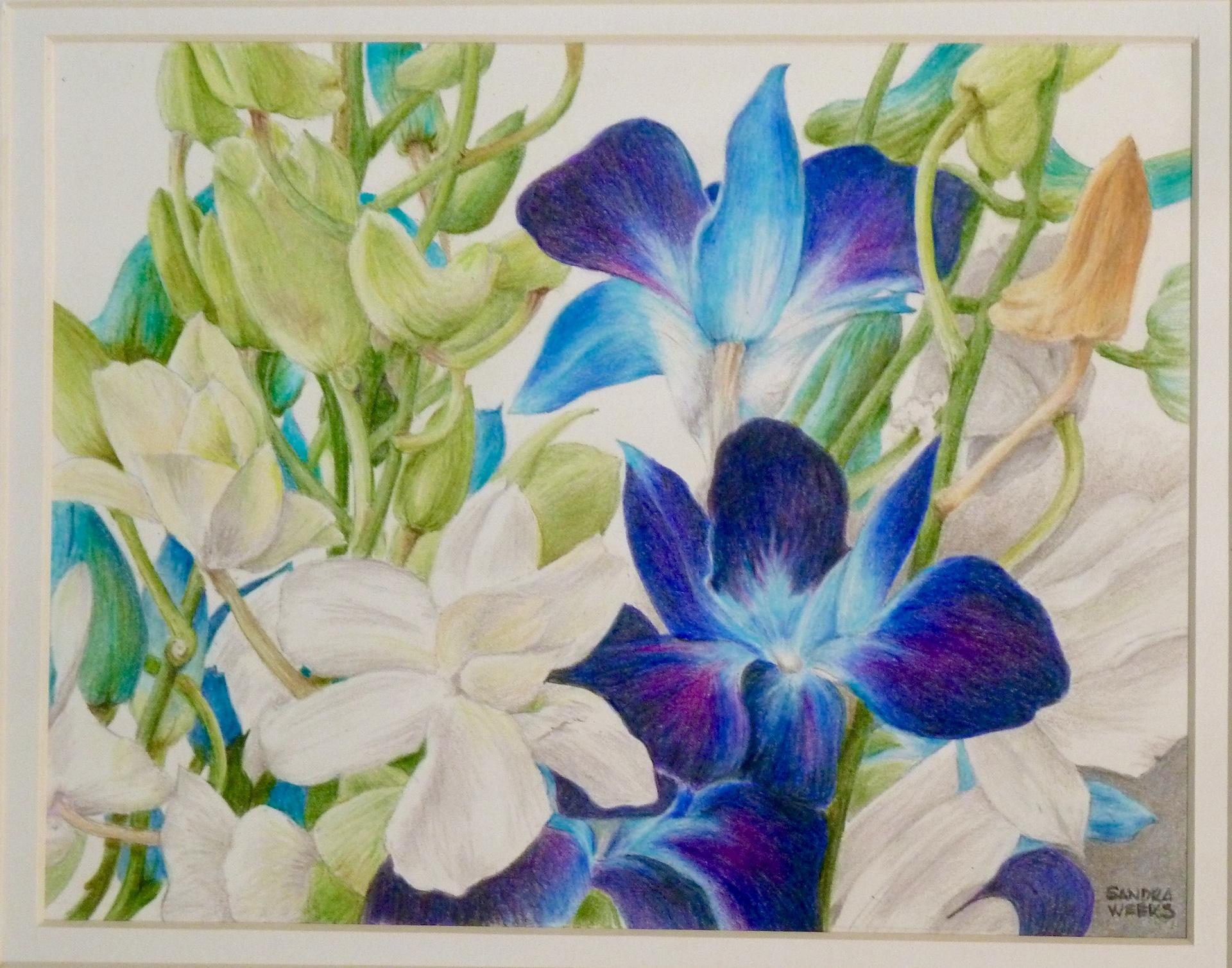 """""""Purple Lillies"""", Colored Pencil, 8""""x11"""""""