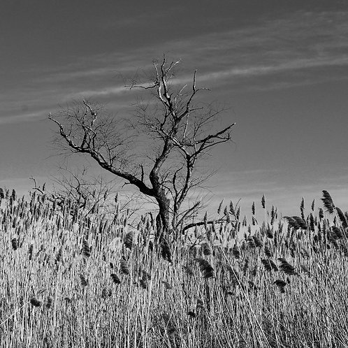 On The Marsh, Lindsay McGrath, Photography - , 16 x 16