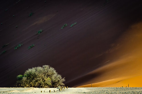 Adaptation, Paul Murray, Photography - Color photography, 12.85 x 20