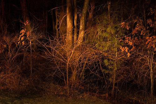 Last Light, Connie Kennedy, Photography -  ,  9.88 x 22.58