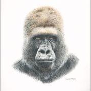 """""""Jungle Animal"""", Colored Pencil, 9""""x9"""""""
