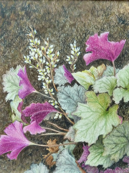 Coral Bells, Sandra Weeks, Colored pencil - , 7 x 6