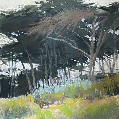 Windblown, Liz Haywood-Sullivan, Pastel - , 12 x 12