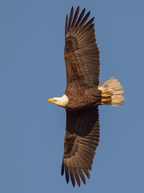 Side Eye On The Fly By, Donna McBrien, Photography - , 18 x 12