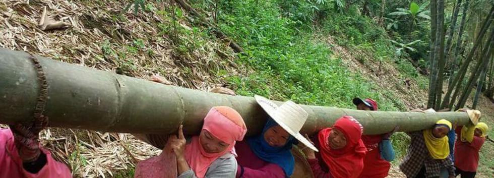 Nan Bamboo