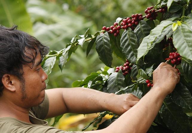 Coffee MG_5419.jpg